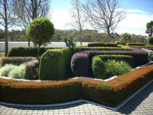 Topiary garden Hedge