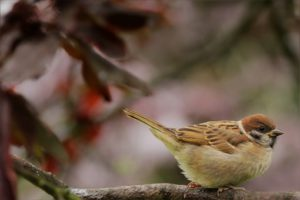 A Sparrow-how-to-attract-sparrows