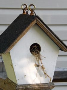 BirdHouse-how-to-attract-sparrows
