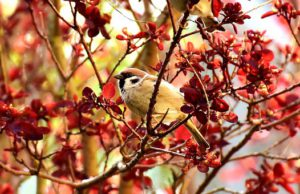 How To Attract sparrow-a-sparrow-in-a-tree