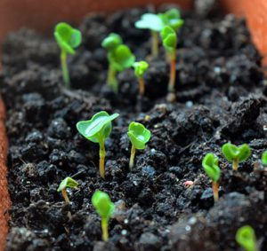 How To Make Organic Soil-seeds-sprouting