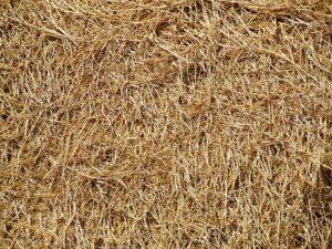 Hay-straw-bale-gardening-techniques