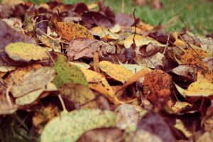 Dig And Drop Composting-dry-leaves